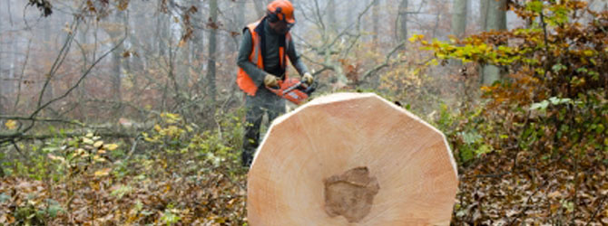 PEFC: Forest Certification